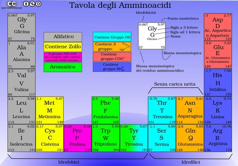 erboristeriarcobaleno aminoacidi proteine schio benessere tavola