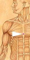 erboristeriarcobaleno-benessere-salute-antiossidanti-schio-Yage-applicazione-CV17