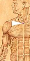 erboristeriarcobaleno-benessere-salute-antiossidanti-schio-Yage-applicazione-CV22
