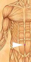erboristeriarcobaleno-benessere-salute-antiossidanti-schio-Yage-applicazione-CV6