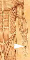 erboristeriarcobaleno-benessere-salute-antiossidanti-schio-Yage-applicazione-LI