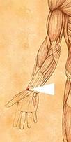 erboristeriarcobaleno-benessere-salute-antiossidanti-schio-Yage-applicazione-LU