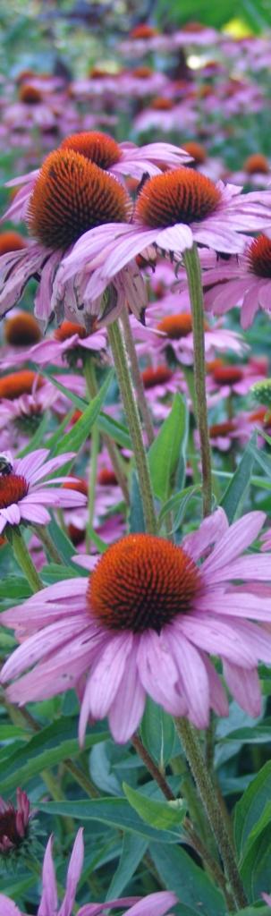 erboristeria-arcobaleno-schio-benessere-antinfluenzali-manugola-ekinflu-piante
