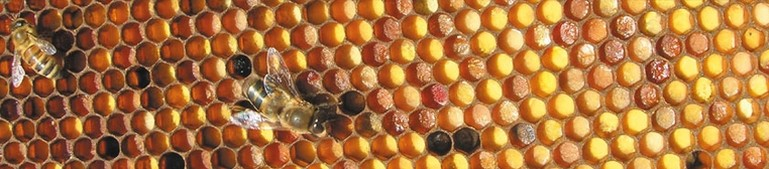 erboristeria-arcobaleno-schio-benessere-antinfluenzali-polline