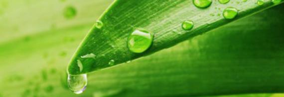 erboristeria-arcobaleno-schio-benessere-antistress-clorofilla