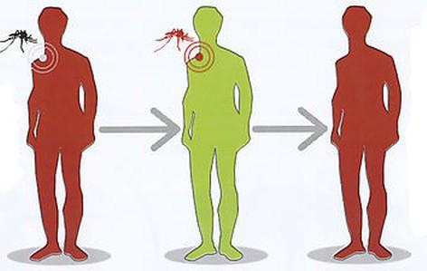 erboristeria-arcobaleno-schio-benessere-antizanzare-malattie
