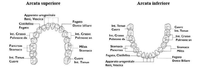 erboristeria-arcobaleno-schio-benessere-ayurveda-denti-arcata-superiore