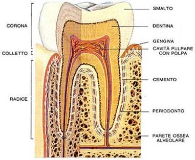 erboristeria-arcobaleno-schio-benessere-ayurveda-denti