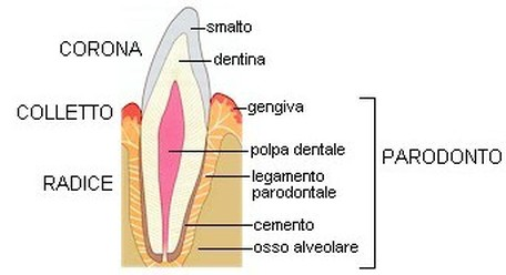 erboristeria-arcobaleno-schio-benessere-ayurveda-oil-pulling-microbi