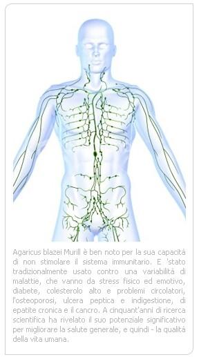 boristeria-arcobaleno-schio-benessere-micoterapia-agaricus-sistema-immunitario