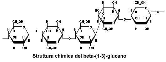 boristeria-arcobaleno-schio-benessere-micoterapia-colesterolo