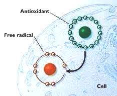 boristeria-arcobaleno-schio-benessere-micoterapia-fungo-antiossidante