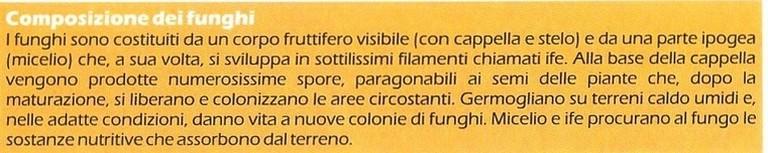 boristeria-arcobaleno-schio-benessere-micoterapia-fungo-composizione