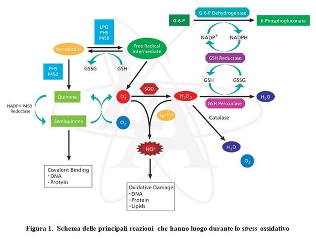 boristeria-arcobaleno-schio-benessere-micoterapia-fungo-enzimi