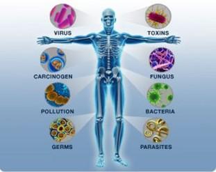 boristeria-arcobaleno-schio-benessere-micoterapia-fungo-sistema-immunitario