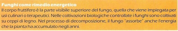 erboristeria-arcobaleno-schio-benessere-micoterapia-funghi-energia