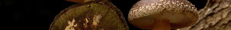 erboristeria-arcobaleno-schio-benessere-micoterapia-funghi-terapia
