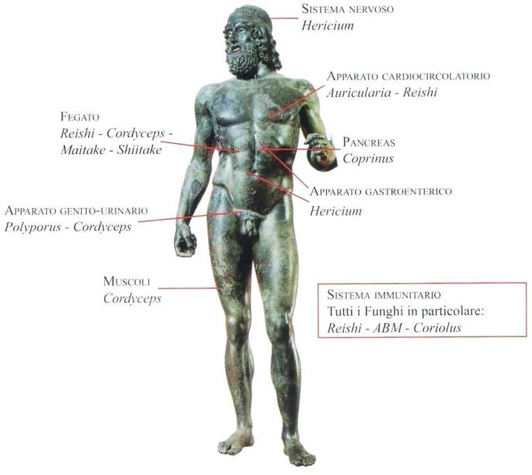 erboristeria-arcobaleno-schio-benessere-micoterapia-tropismo