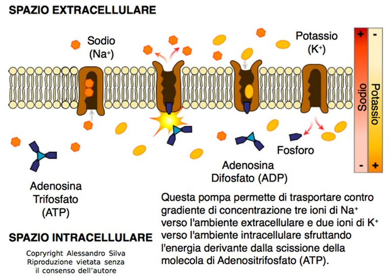 erboristeria-arcobaleno-valdagno-schio-sup_onc-fito-parete_cell
